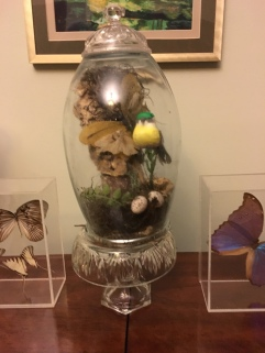 Terrarium from a vase, candle holder, candy dish, and sugar bowl lid